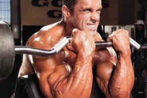 عضلات دوسر بازو