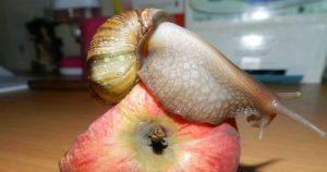 غدای حلزون چیست ؟