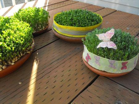 درست کردن سبزه