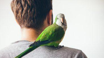 آموزش زبان به طوطی