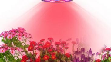 لامپ رشد گیاه چیست