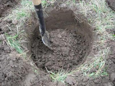 حفر چاله برای کاشت درخت