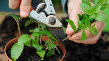 پیوند زدن گیاهان