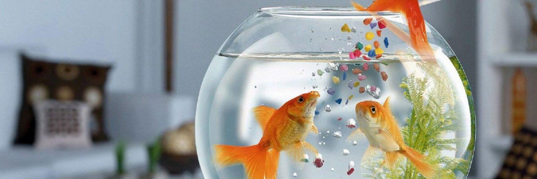 نگهداری از ماهی قرمز عید