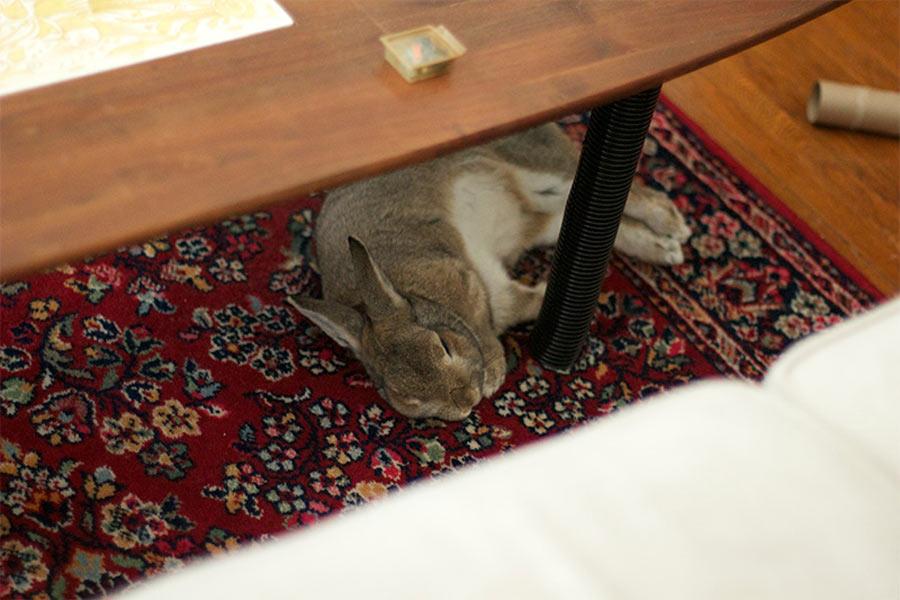 محافظت مبلمان در برابر آسیب خرگوش
