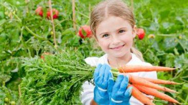 هویج حاوی مقادیر زیادی فیبر غذایی است و باعث هضم غذا می شود