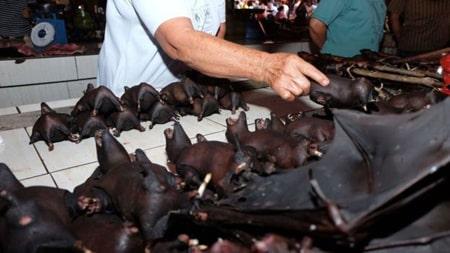 خفاش ها در یک ماه در بازار اندونزی فروخته می شوند