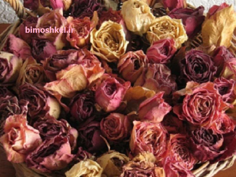 آموزش طرز خشک کردن گل رز