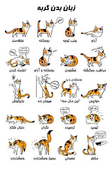 آموزش زبان گربه