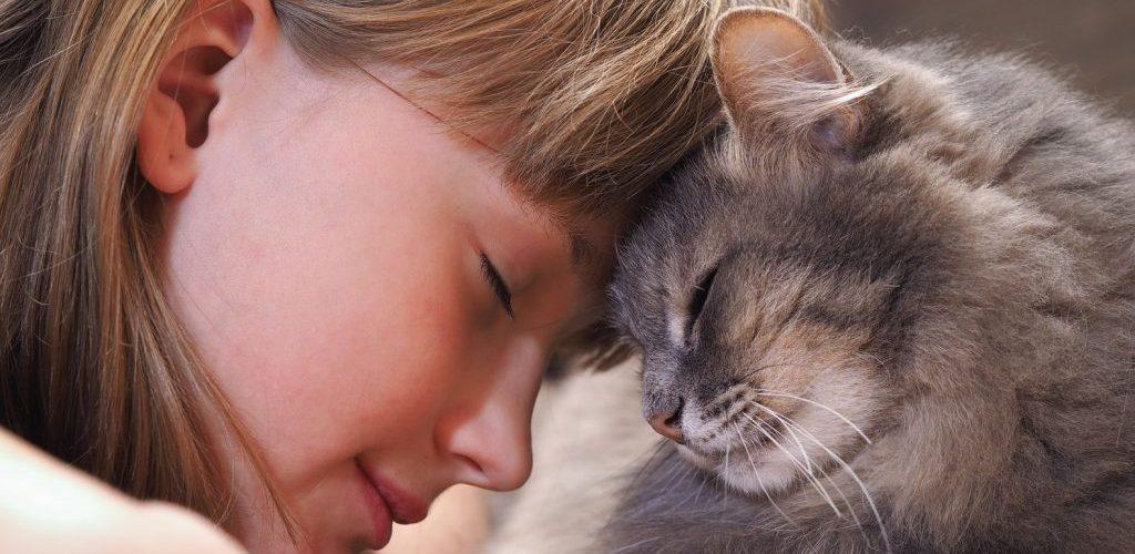 چگونه زبان گربه را بفهمیم؟