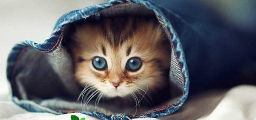 زبان گربه ها