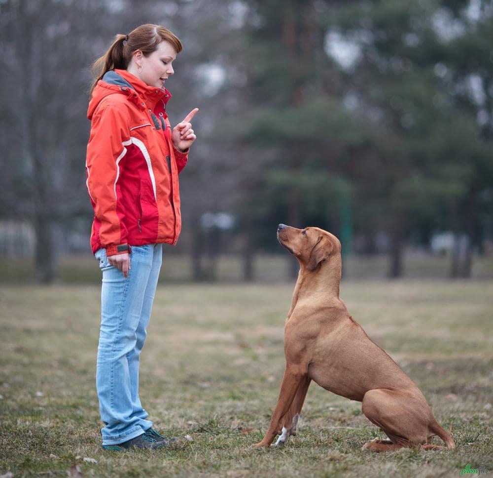 """آموزش فرمان """"ایست"""" به سگ"""