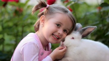 چگونه خانه خود را در برابر خرگوش محافظت کنید